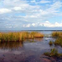 Западная часть Невского