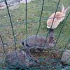Кролики в музее мельниц