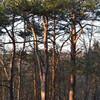 Заповедный лесной массив Нымме