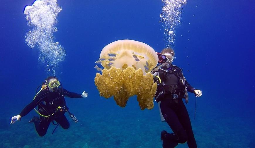 """Медуза на """"Секретном рифе"""" у скалы Хир-Рап."""