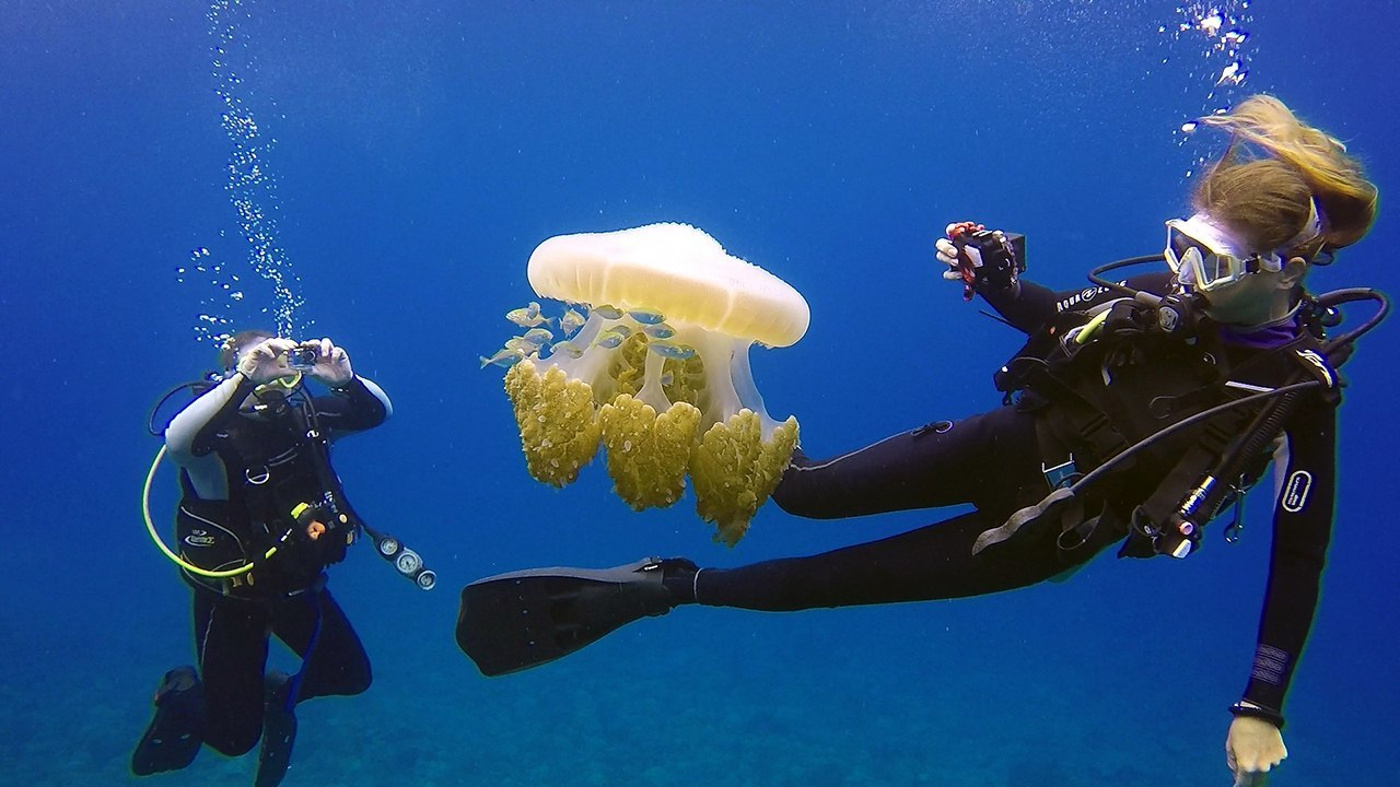 интерьер смешные картинки про медуз и водолазов результате подрыва