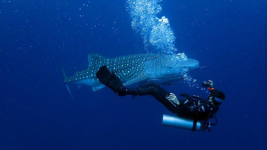 Инструктор по дайвингу Дмитрий Поляков и китовая акула у острова Ко-Чанг.