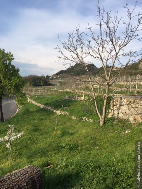 Виноградники в Вальполичелла