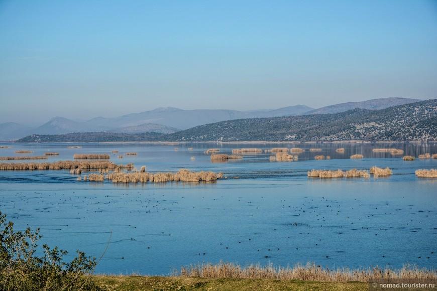 Следующее место, где встретилось ОЧЕНЬ много птиц - это заповедник Хутово Блато в Боснии и Герцеговине. Это сеть огромных озер с поросшими камышом берегами и островками, куда прилетает на зимовку масса птиц. Увы и ах, но подойти к основных водоемам не удасться - вдоль них проходит широкий ров с водой. Да и при таком раскладе птицы не подпускают, они отплывают или улетают от берега, стоит только выйти из машины. В сезон там можно нанять специальную лодку и отправиться на бердинг - но стоит это не по-балкански дорого.