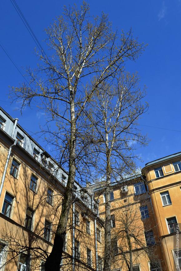 А в тесных дворах-колодцах деревьям никак не проснуться. Тянутся они к солнцу и все ждут , как и люди, тепла.