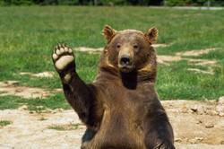 Камчатские медведи выходят к туробъектам