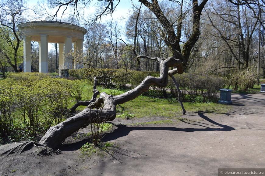 Далеко от центра - Екатерингофский парк. Корявое дерево почему-то напомнило очень похожее в Люксембургском саду... Потому и сфотографировала.