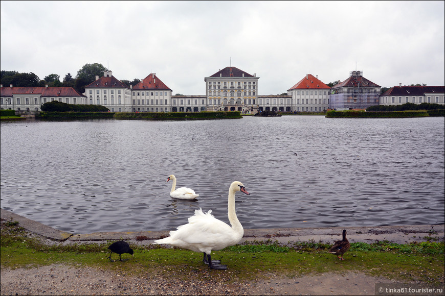 Полноправные хозяева парка - лебеди, бесспорно украшающие его своим присутствием. Их тут очень много.