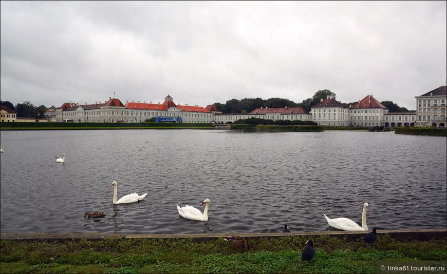 Каналы Нимфенбурга — это  самое настоящее царство лебедей, которые живут здесь в большом количестве и чувствуют себя вполне привольно.