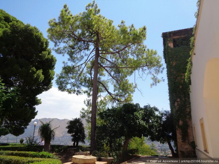 Сад за Кафедральным собором