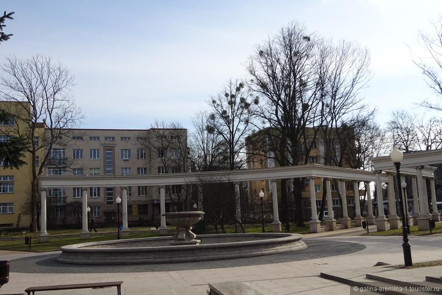 Калининград, на многих деревьях шары растения-полупаразита омелы