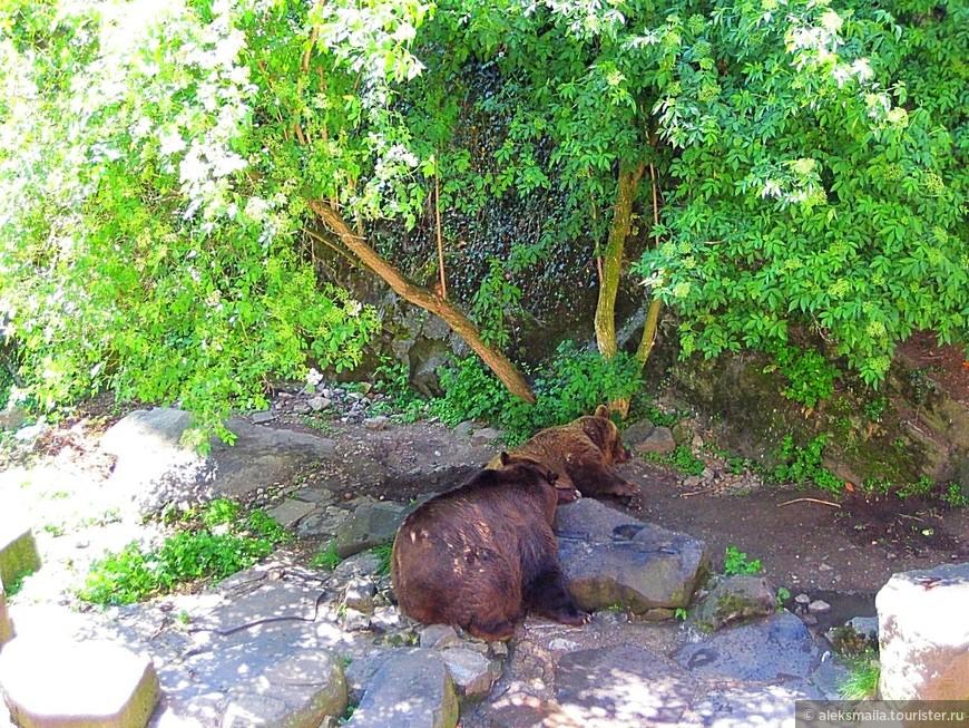 Чтобы попасть во второй двор, нужно перейти мост через медвежий ров. Во рве Крумловского замка также, как и в 16-м веке, живут медведи, которые являются символом города и очень нравятся туристам.