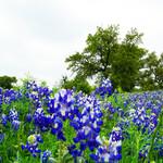 Техас, США