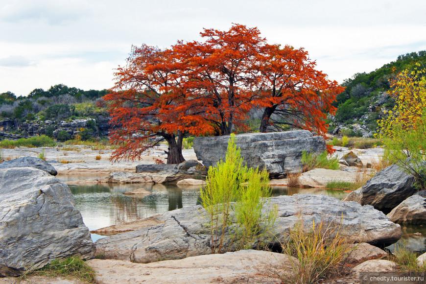 Лысые кипарисы. Удивительные, огромные деревья, которые растут прямо на камнях без почвы.