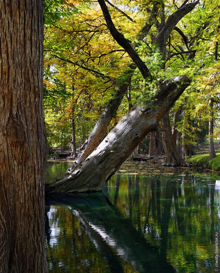 Единственное озеро в Техасе, которое сделали не люди... и все таки оно искусственное, его создали бобры.
