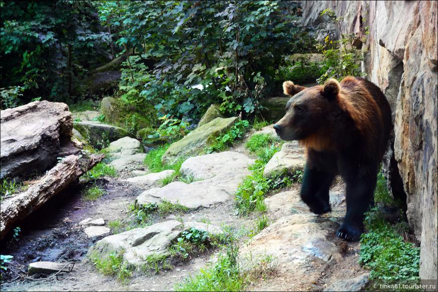 Медведь охотно позировал.