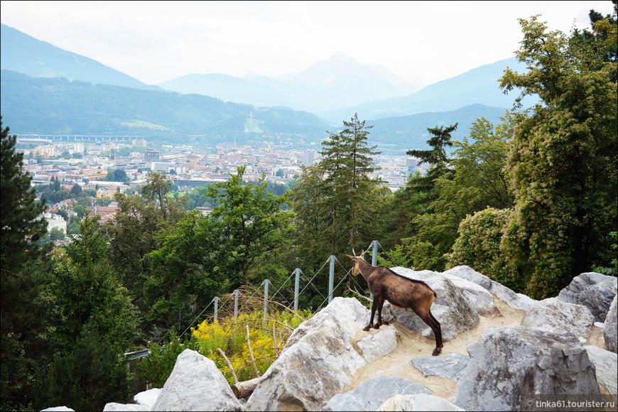 По-моему этот козлик любуется панорамой Инсбрука.