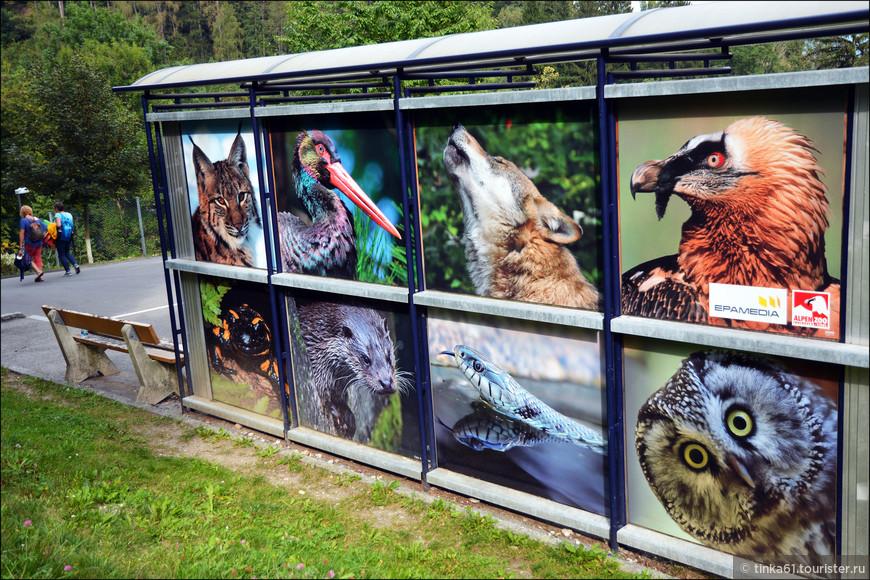 Профессиональные фотографии альпийских животных, которых можно увидеть в зоопарке. Сам зоопарк небольшой, мы его обошли в спокойном темпе за час.