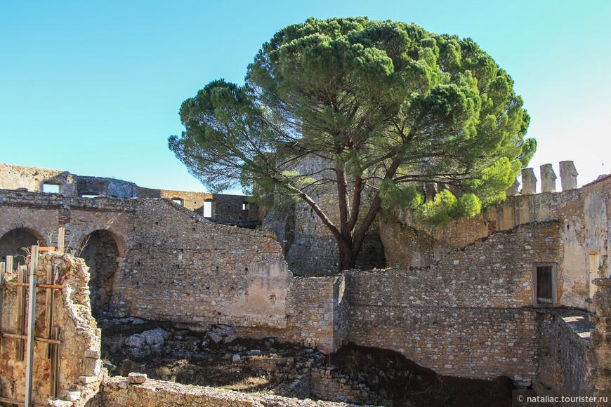 А вот и дерево, которое я обещала вам показать. Здание разрушено, а оно живет, вопреки всему.