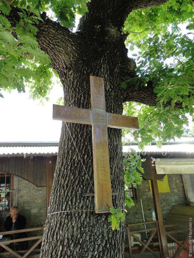 Крестообразный дуб перед келией старца Гавриила.