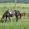 лошади в Тебердинском ущелье