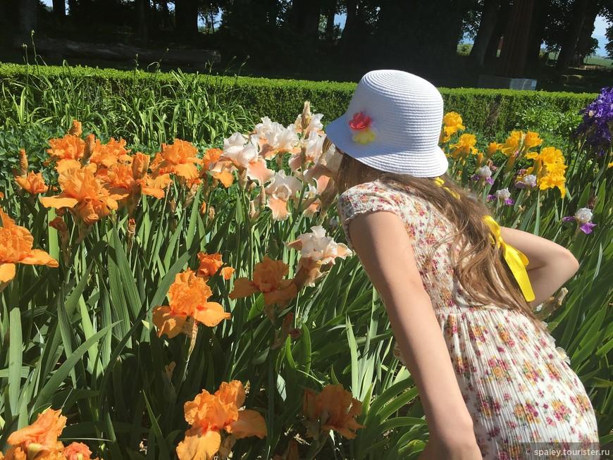 Старинная, частная Усадьба открыта для посетителей в период цветения Ирисов
