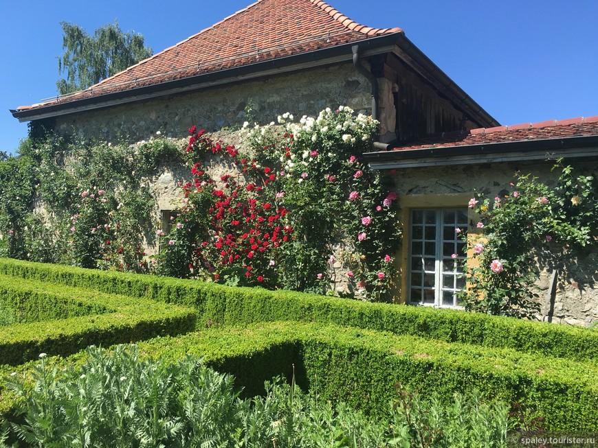 До 300  разнообразных видов Роз дополняют коллекцию Ирисов.