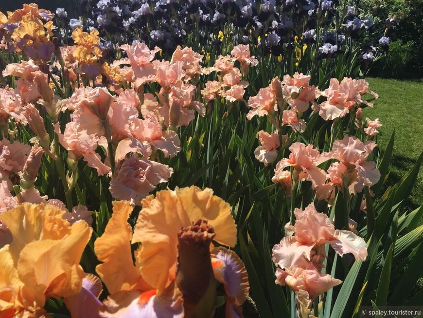 Посетители имеют возможность заказать на месте все сорта Ирисов , представленных в саду.
