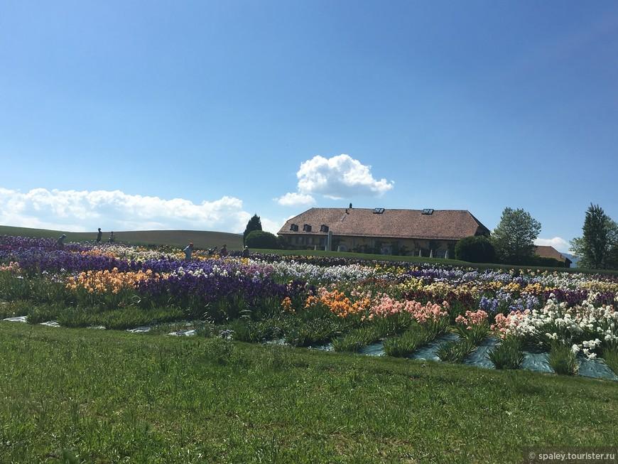 Уникальный сад Ирисов поражает разнообразием и цветовой палитрой!
