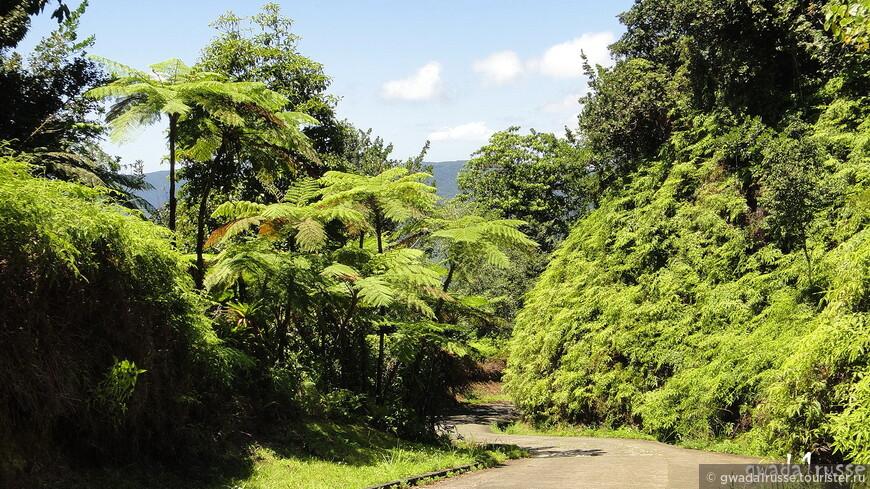 Живописная дорога Национального парка Guadeloupe.