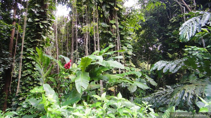 Дождевой тропический лес, он такой.