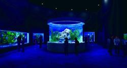 Самый крупный в Израиле океанариум откроется в июле