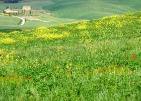 Дорога в Тоскану, ч. третья. Пьенца