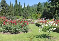 Никитский сад, бал роз
