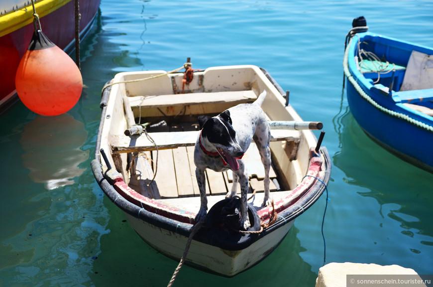 """""""Морской волк"""". Сначала он умело позировал нам, а потом перемахнул в другую лодку к своему хозяину."""