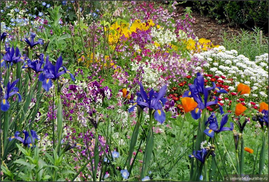 К удивлению,  в садах комплекса множество полевых цветов.