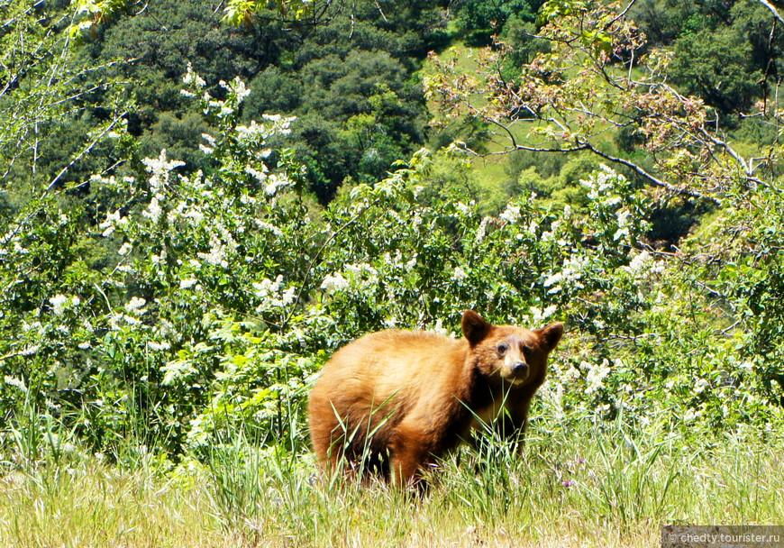 Медведь стоит на обочине дороги. Может попутку ловит. Не дай Бог поймает.