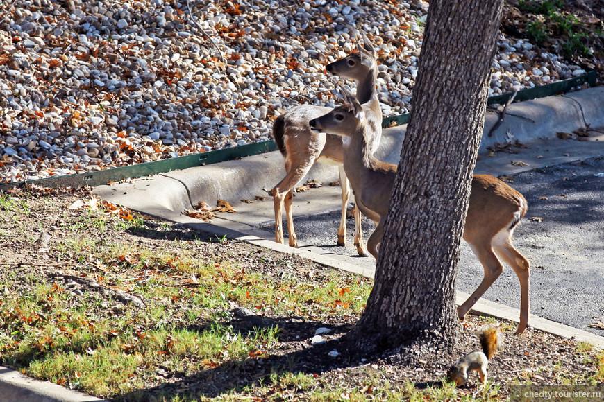 Животные вполне свободно живут в нашем столичном городе с населением больше миллиона. Правда городе площадь парков в несколько раз превышает площадь жилой застройки.