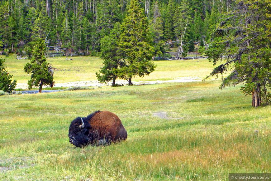 Я вообще не верю что бизоны травоядные. Отожрать такую морду, питаясь исключительно травой невозможно.