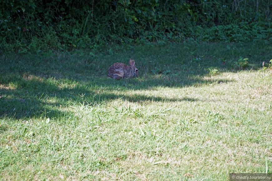 этот тоже, но он уже в лес не убегает рядом с домом в шиповнике живет.