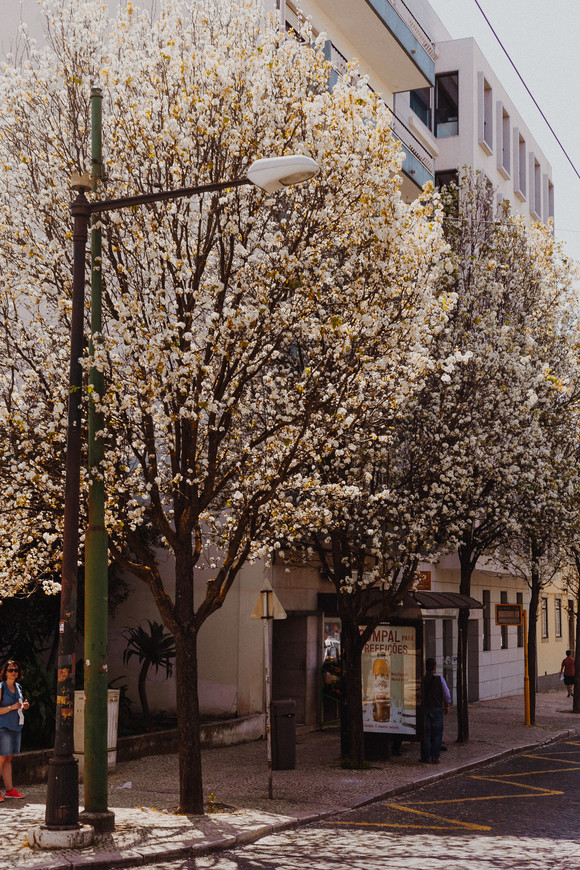 Цветущие деревья в апреле