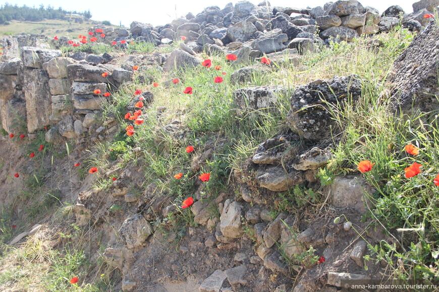 Цветение мака в Иераполисе