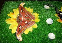 бабоче.jpg