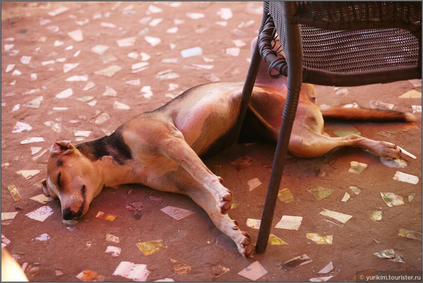 К друзьям в ресторан прибилась собака Кукла, которая очень любила валяться на теплом полу и выпрашивать еду у посетителей :)