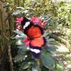 Парк Бабочки