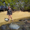 Пляж черепахи