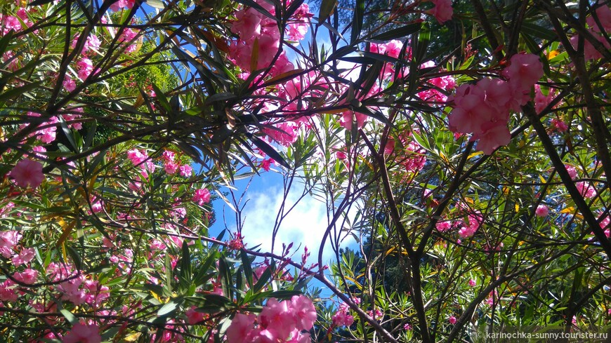 Небо цвета фламинго...