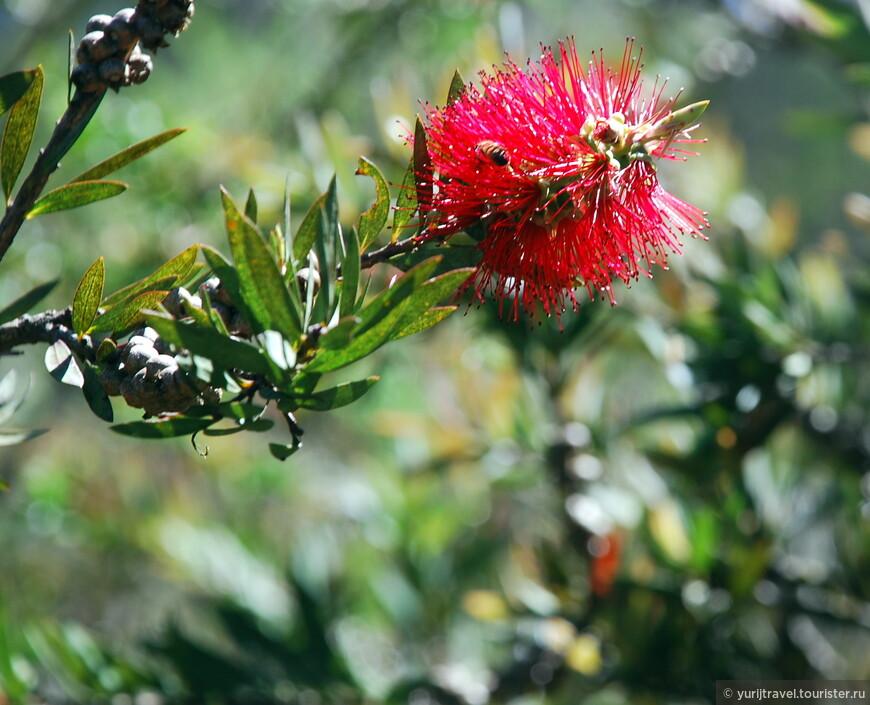 Но зато вокруг жужжат пчелы и все цветет и пахнет ...