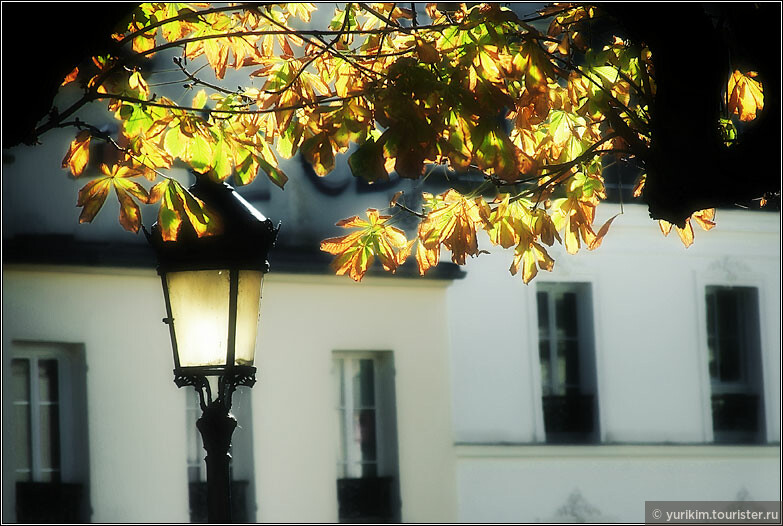 Низкое солнце зажигает фонари и подсвечивает листья