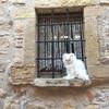 Кот любит позировать туристам и собирать лайки в Инстаграме.